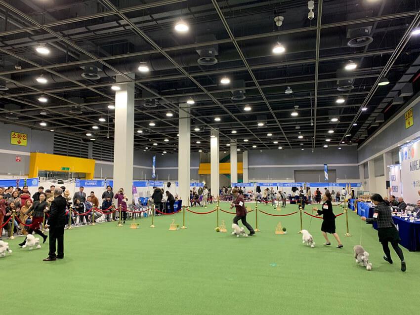 Premier Dog Show Korea akan diadakan pada 20-22 Desember