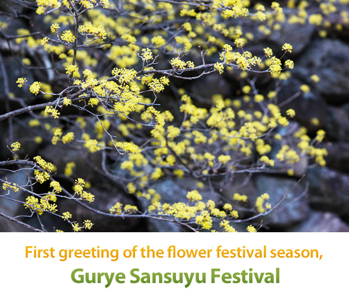 Festival Sansuyu Gurye, Merupakan Sambutan Pertama Datangnya Musim Bunga