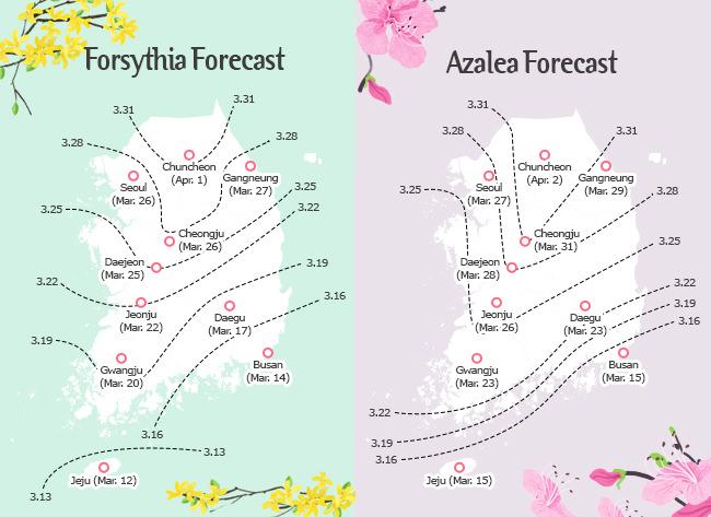 Bunga Musim Semi Bermekaran di Jeju-do Mulai 12 Maret!