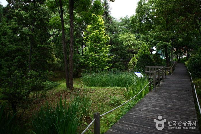 Hutan Arboretum Hongneung
