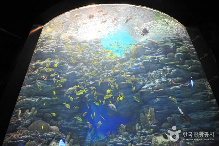 Akuarium Busan SEA LIFE (SEA LIFE 부산아쿠아리움)