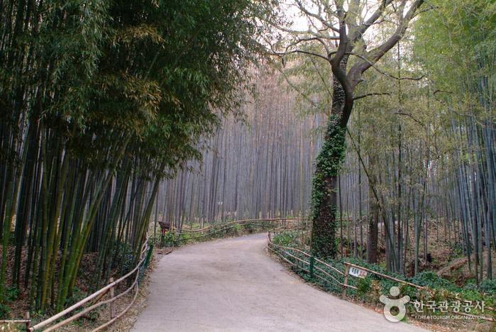 Taman Bambu Daenamugol