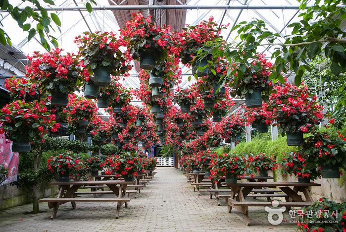 Kebun Raya Asan