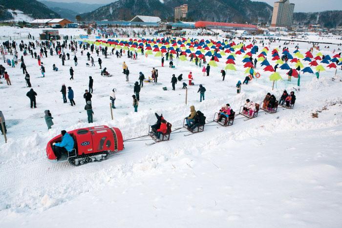 Festival Ikan Trout Pyeongchang