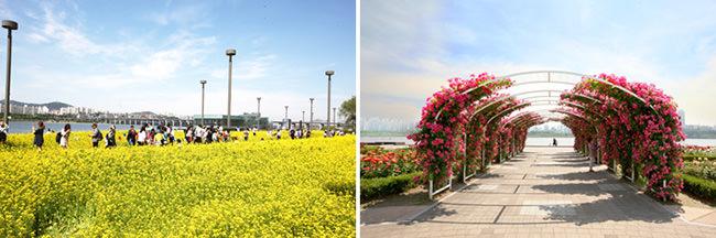 Musim Semi Tiba di Korea! Sungai Hangang Persembahkan Rangkaian Festival Bunga