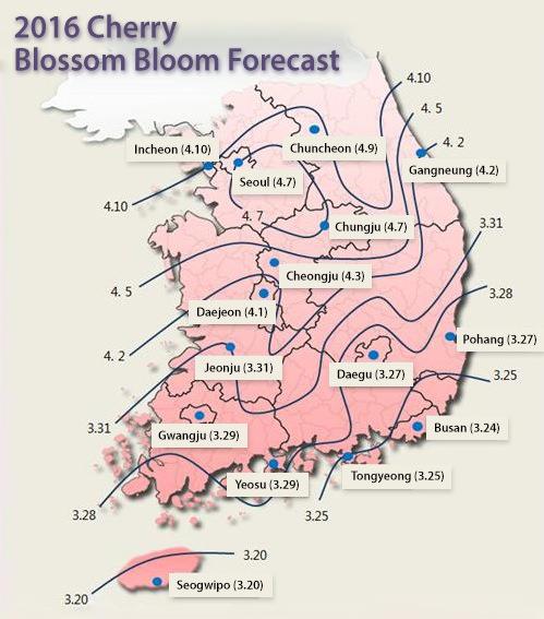 Perkiraan Puncak Mekarnya Bunga Cherry, Seoul Pada 13 April