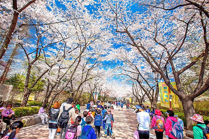 Jalan-Jalan Seru Musim Semi di Kota Seoul