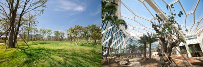Yuk, Kunjungi Rumah Kaca Terbesar di Korea, Taman Botani Seoul