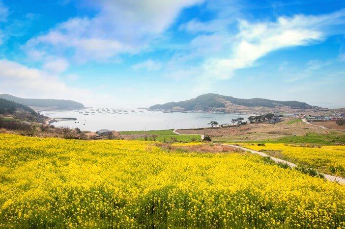 Destinasi Musim Semi Terbaik Korea