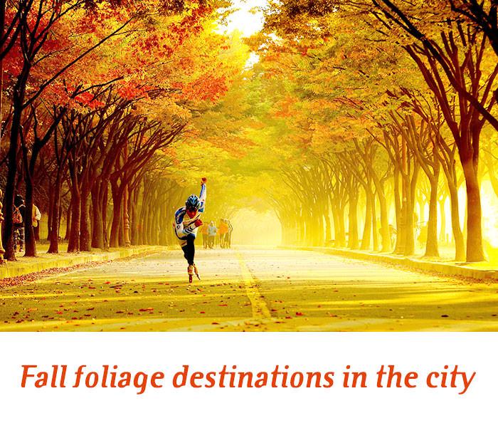 Tujuan Wisata Musim Gugur di Kota