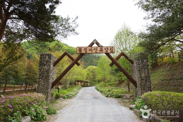 Hutan Rekreasi Buljeong