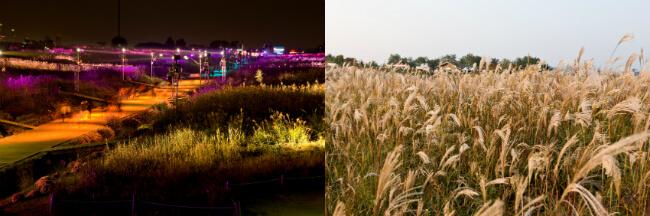 Dapatkan Kenangan Indah di Festival Silver Grass Seoul ke-17
