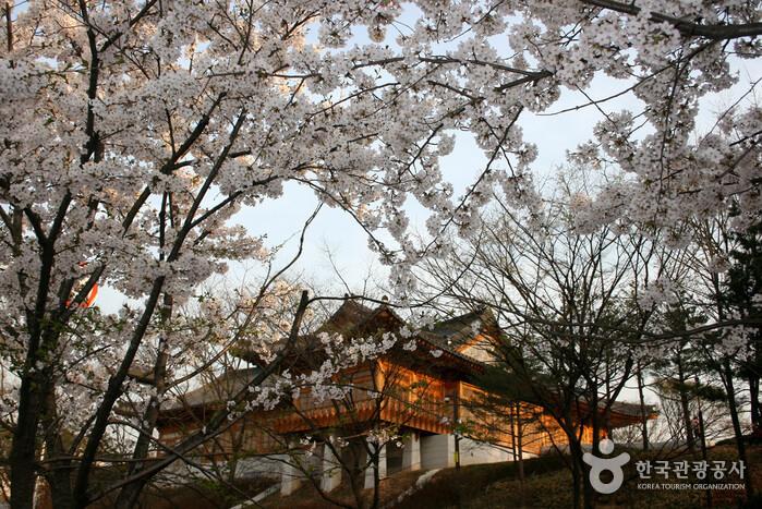 Festival Bunga Musim Semi Yeouido Yeongdeungpo (영등포 여의도 봄꽃축제)