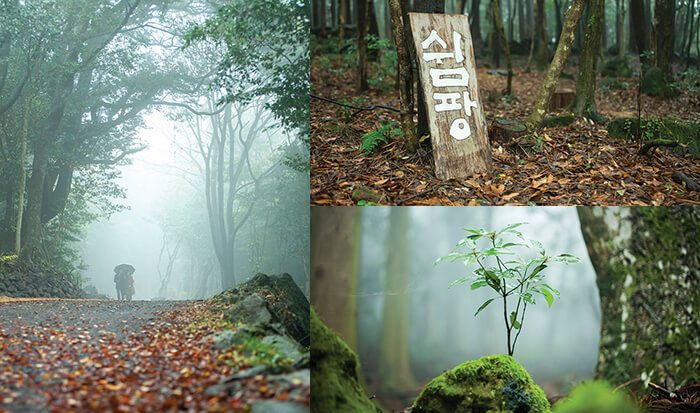 Hutan Penyembuhan Seogwipo 서귀포 치유의 숲