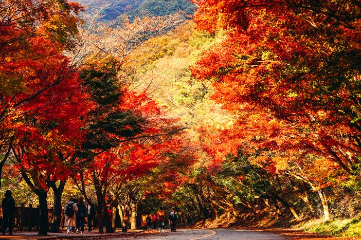 Taman Nasional Naejangsan sebagai Destinasi Musim Gugur yang Menarik