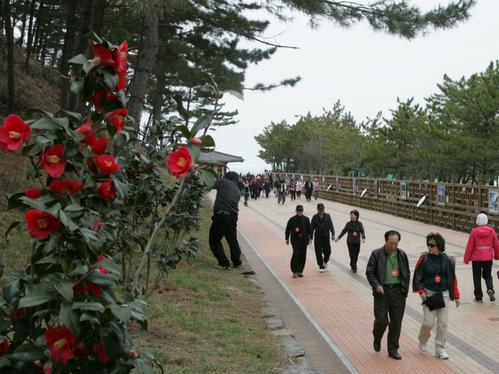 Festival Bunga Kamelia dan Hidangan Gurita Seocheon