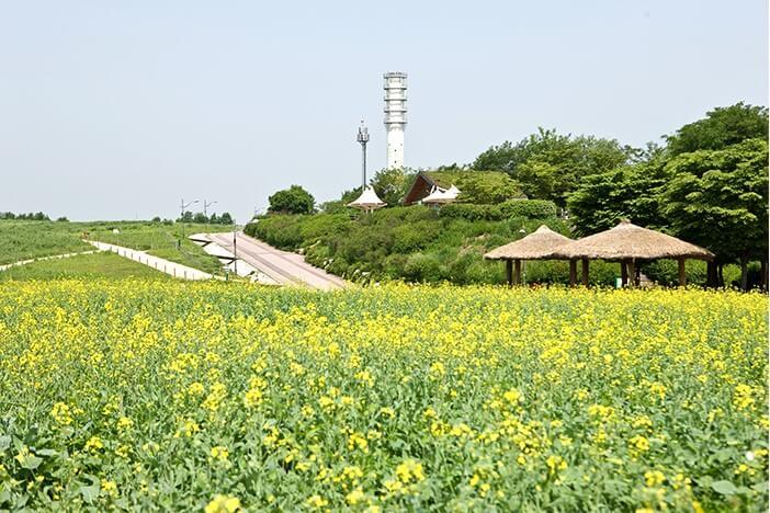 Jalur Kedatangan Musim Semi di Seoul