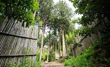 Hutan Cemara Jeongnamjin  정남진 편백숲 우드랜드