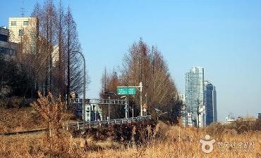 Taman Ekologi Yangjaecheon (양재천 생태공원)