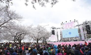 Menikmati Bunga di Festival Bunga Musim Semi Yeouido Yeongdeungpo!