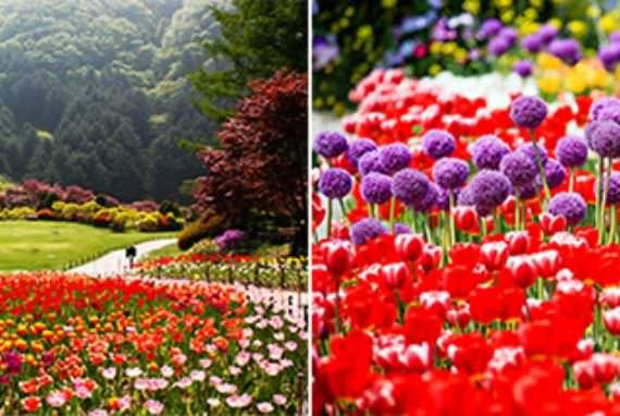 Nikmati Tamasya Menyenangkan bersama Bunga-Bunga Musim Semi!
