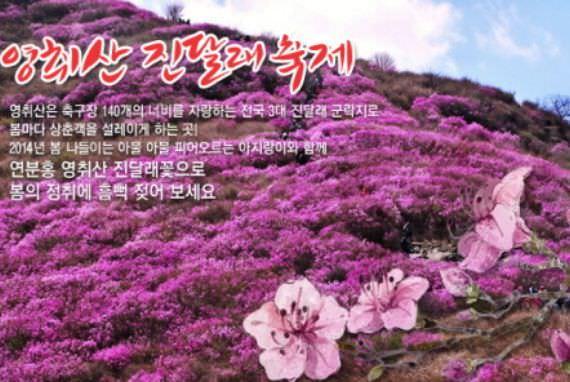 Festival Azalea Yeongchwisan