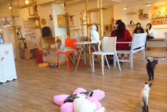 Cafe Tom's Cat di Hongdae