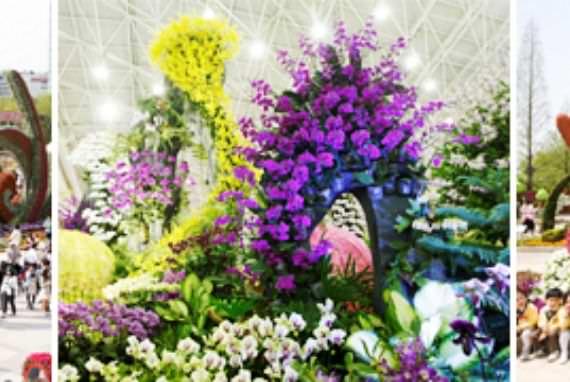 Pertunjukkan Internasional Bunga di Daerah Goyang
