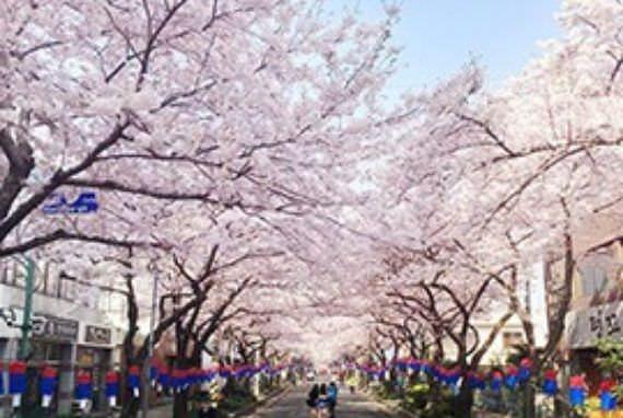 Musim Semi di Korea