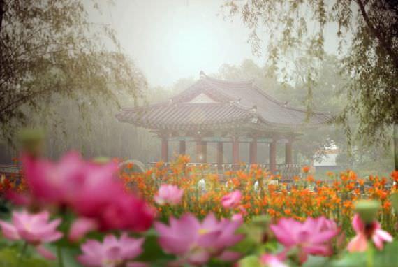 Festival Teratai Seodong Buyeo