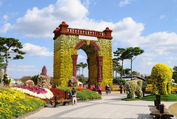 Festival Grand Chrysanthemum Hampyeong
