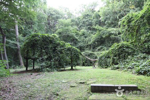 Pohon Doraenamu di Istana Changdeokgung