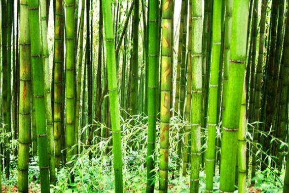 Rencanakan Wisata Alam Terbaik di Hutan Bambu Damyang, Juknokwon