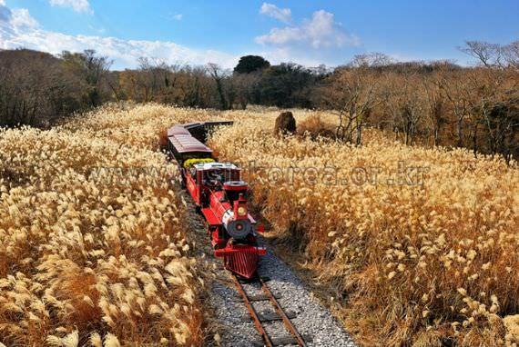 Train Ride to Jeju