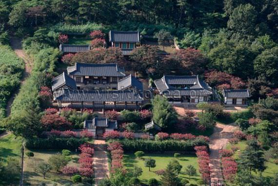 Crape Myrtles of Byeongsanseowon Confucian School