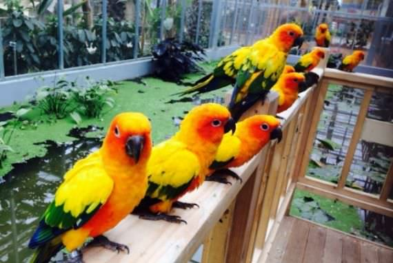 Taman Burung Gyeongju