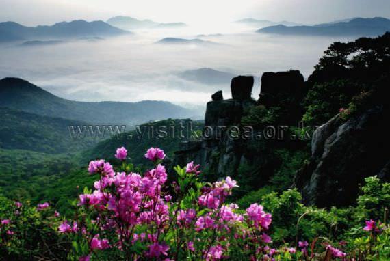 Geumjeongsan Mountain azalea