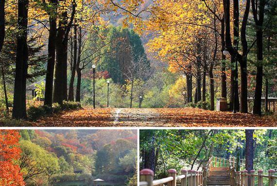 Merangkul alam di Seoul Grand Park 'Forest Bath'