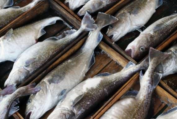 Festival Ikan Cod Geoje