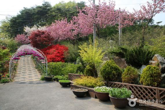 Taman Kohwun