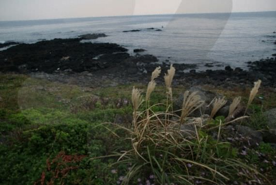 Sinpung Sincheon Bada Mokjang (Peternakan Tepi Pantai)