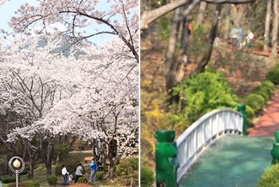 Lokasi Bunga Musim Semi yang Terkenal