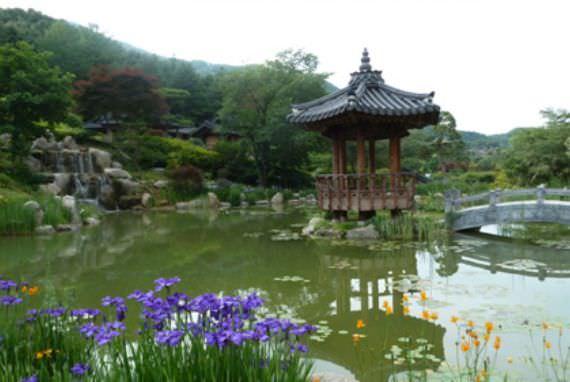 Festival Iris Garden of Morning Calm