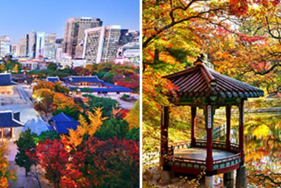 Kesempaan Terakhir Melihat Daun Berguguran di Istana   Kerajaan Seoul
