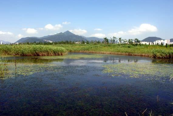 Cagar Alam Burung Nakdonggang (Pulau Eulsukdo)