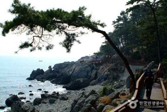 Pulau Dongbaekseom di Busan