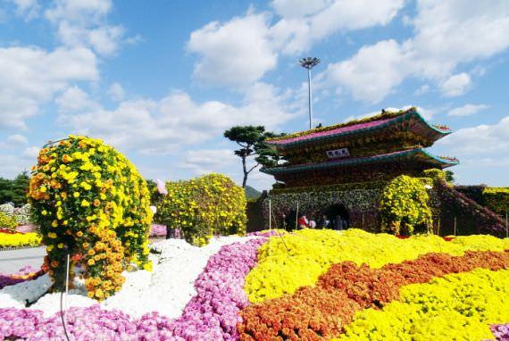 Festival Grand Chrysanthemum Hampyeong