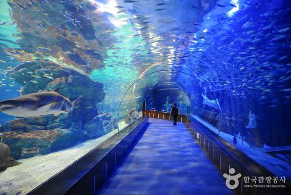 SEA LIFE Akuarium Busan